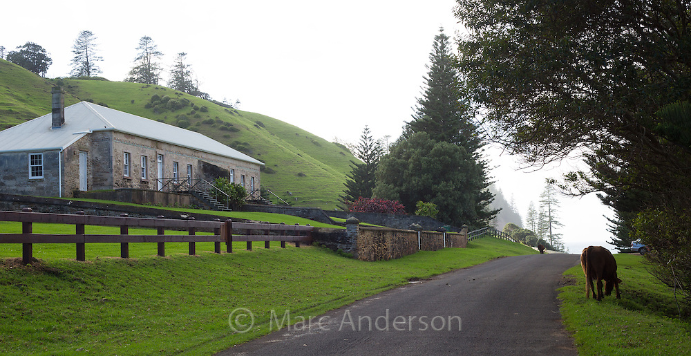 Heritage buildings on Quality Row, Norfolk Island, Australia