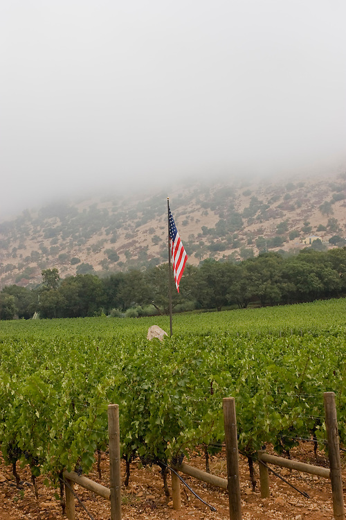 Vertical of American flag in Napa Valley vineyard