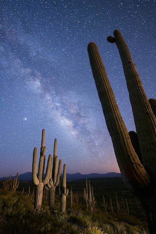Stars and the Milky Way above a hillside of Saguaro cactus east of Peridot, Arizona.