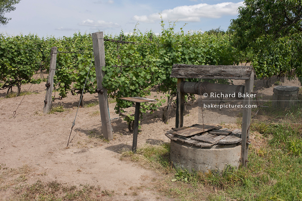 A family-run plot of land and well used as a vineyard near Bakonygyirot, Gyor region, Gyor-Moson-Sopron, Hungary