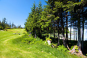 Southeast Alaska,   Wrangell,  Muskeg Meadows golf course,