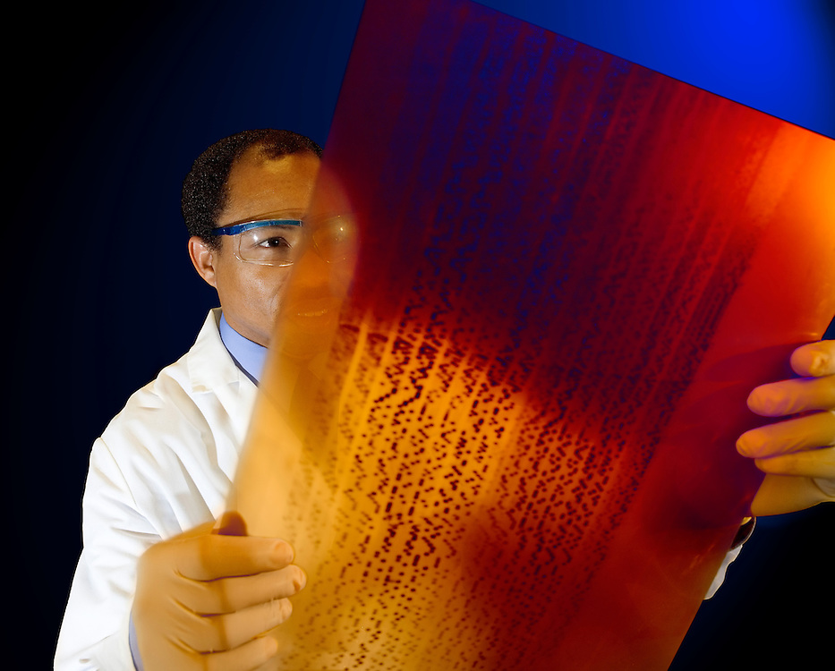A scientist looks at an X-ray radiograph of a series of sequenced DNA segments isolated by chain terminator sequencing, also known as Sanger sequencing. Today sequencing of DNA segments is being done more often by dye terminator sequencing, greatly reducing reading errors and the time needed for analysis.