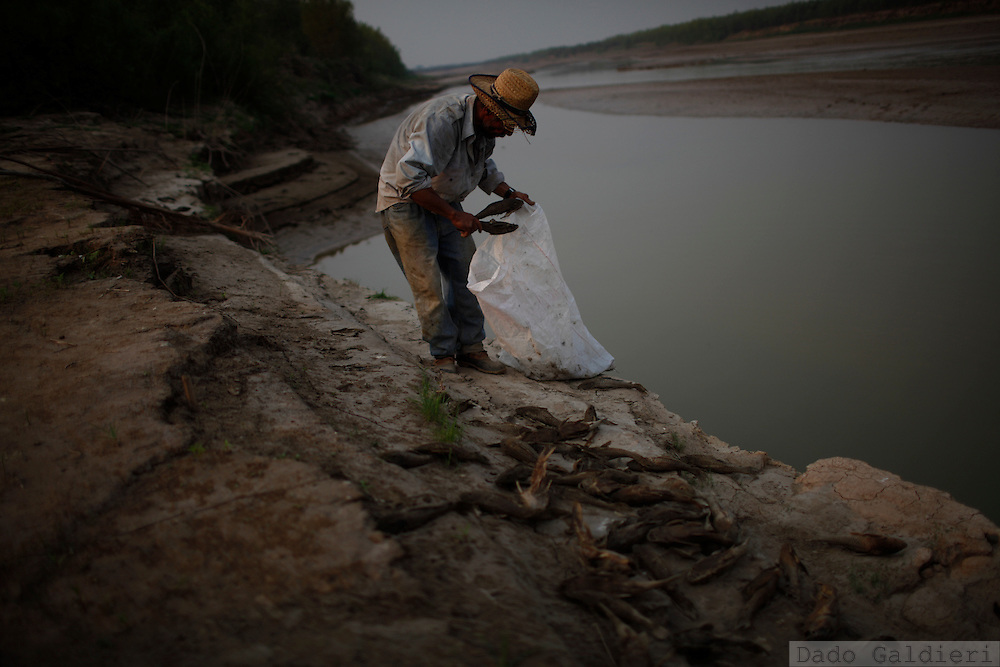 A farmer picks up dead fish that appeared after a uncommon cold weather reached the region of the Pailas river, Santa Cruz, Bolivia, Saturday, Aug. 21, 2010.(Hilaea Media/Dado Galdieri).