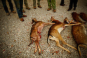 PMM#071109_The Chase_ Herdade do Peral, Évora, Alentejo, Portugal. Deer killed during a hunt.