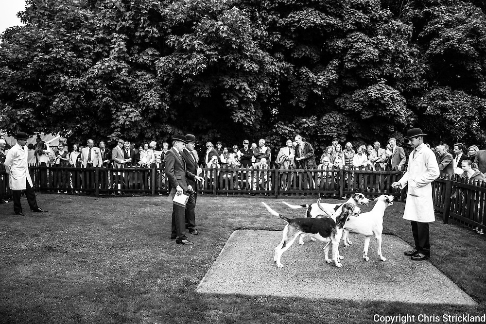 Greenwells, Bowden, Scottish Borders, UK. 24th July 2016. The Duke of Buccleuch Hunt Puppy Show 2016.