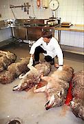 A pack of wolves shot by the norwegian authorities 18. mach 2001. Ulvene i Atndals-flokken ble alle skutt. Her er de til obduksjon ved Nina i Trondheim.