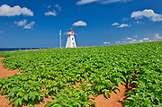 Cape Tryon Lighthouse, potatoes<br /> Cape Tryon<br />Prince Edward Island<br />Canada