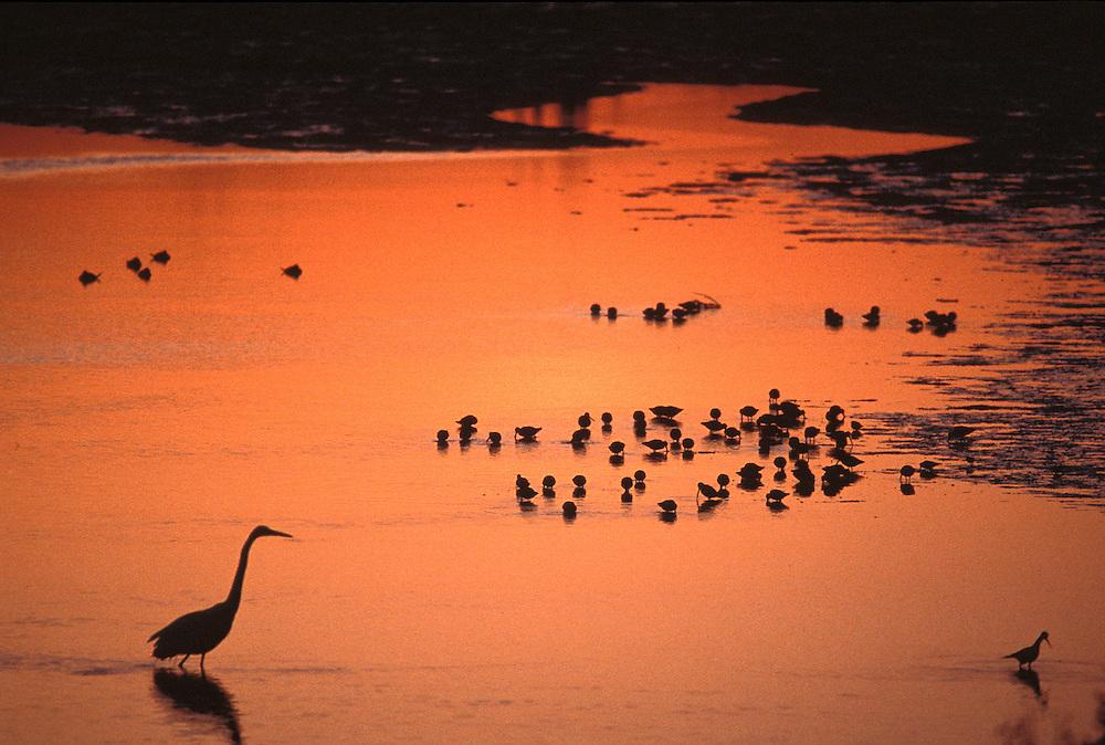 Palo Alto Wetlands.