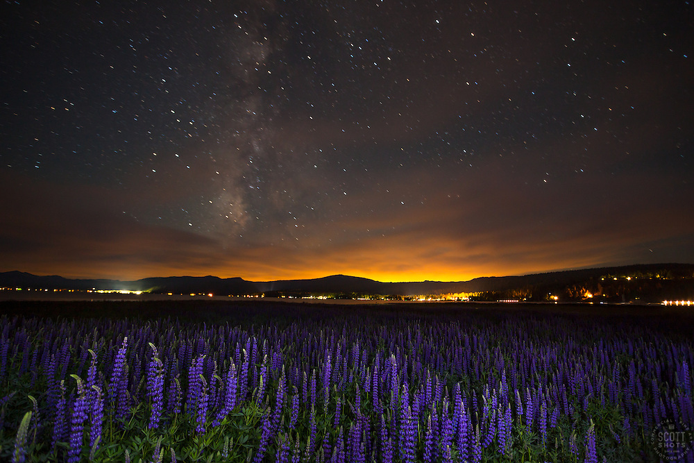 """""""Tahoe Lupine at Night 1"""" - Photograph taken just before sunrise of Lupine wildflowers, the night's sky, the Milky Way, and Lake Tahoe."""