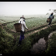 Burmese refugee workers walk to a field of vegetables near Mae Sot, Thailand.
