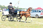 Class 21 - Novice Hackney Pony
