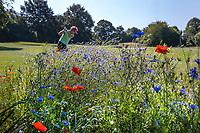 NETTETAL  (Duitsland) -  wilde bloemen, korenbloem, klaproos,  Haus Bey Golfanlage eV.  COPYRIGHT KOEN SUYK