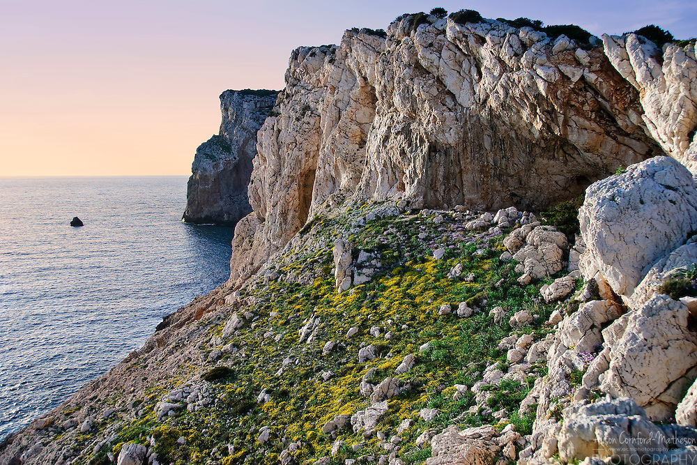 Wildflowers cover the cliffs of Capo Caccia, Sardinia at sunset