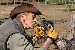 © Licensed to London News Pictures. 28/04/2015<br /> Dave Hill  (SCAR Manager) kissing Moo the Emu.<br /> Second Chance Animal Rescue (SCAR) in Crockenhill,Kent have just taken delivery of two Emu's. Moo who is male and 3 years old and the smaller Emu Zayla an 8 month old female. both have been rescued from a private property in Dartford,Kent after SCAR received a call for help from the owner.<br /> Bromley Council have placed a 6 month eviction order on the animal rescue chairty to remove sheds and buildings that house rescued animals.<br /> (Byline:Grant Falvey/LNP)