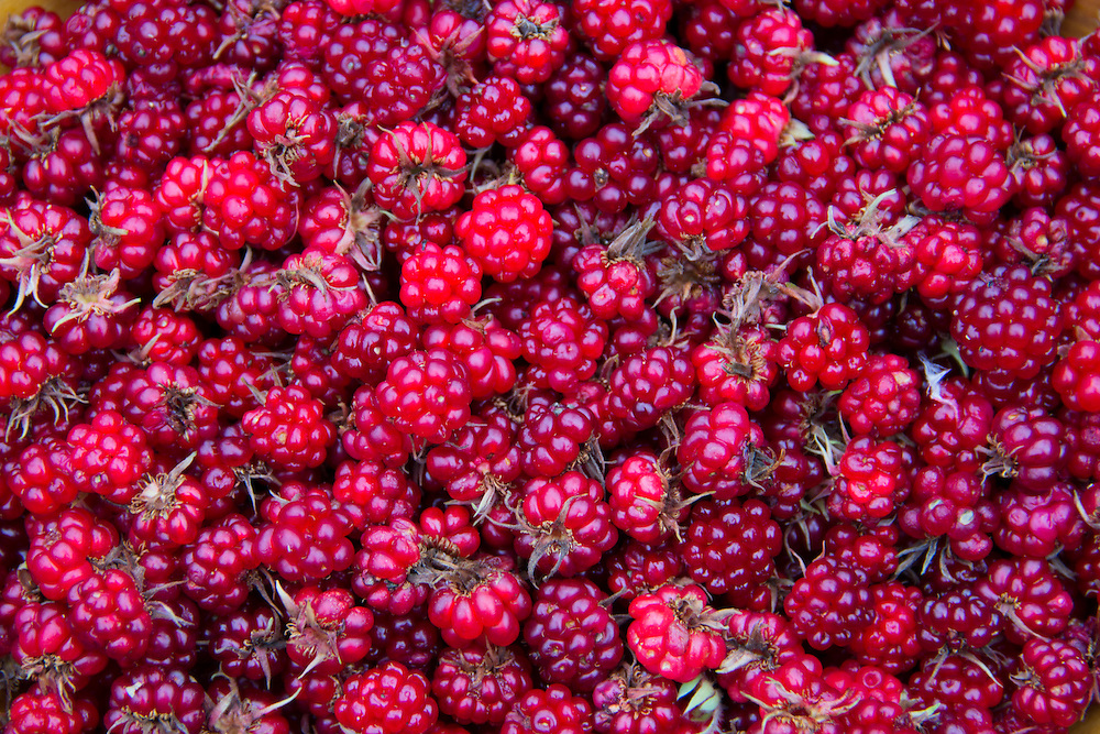 Bright red nagoonberries fill the frame.