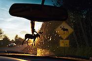 Vereinigte Staaten von Amerika, USA, 2001: Auf der Straße nach Ashland bei schlechter Sicht durch die tiefstehende Sonne. Die Straße wird häufig von Elchen überquert. Deshalb ermahnt ein Schild die Autofahrer zur erhöhten Aufmerksamkeit. Das Foto ist aus dem Wagen heraus aufgenommen worden. Am Rückspiegel des Autos hängt ein Elchmaskottchen. | United States of America, USA, 2001: On the road to Ashalnd, often moose crossing the road, sign post on the side of the road, moose crossing warning, bad sight because of the down going sun. View from inside a car, moose masquot hanging on the mirror, Maine. |