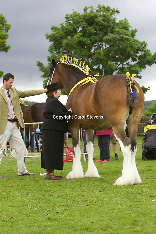 Philip Woof's Marieth Maizie (s Marieth Major) with foal Marieth Maverick (s  Red Brae Mascot) with Judge Delma Nulty
