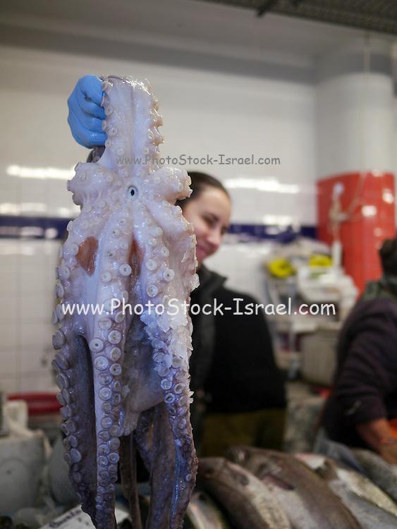 Fishmonger sells an octopus. Costa Nova, Portugal