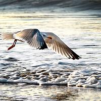 Nederland, Wijk aan Zee, 16-01-2013.<br /> Foto : Klaas Jan van der Weij