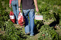 A man and a woman walk through a vegetable field carrying bags of apples and baskets of organic vegetables.