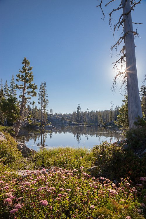 """Wildflowers at Loch Leven Lakes 2"" - Photograph of wildflowers at High Loch Leven Lake in the Tahoe National Forest."
