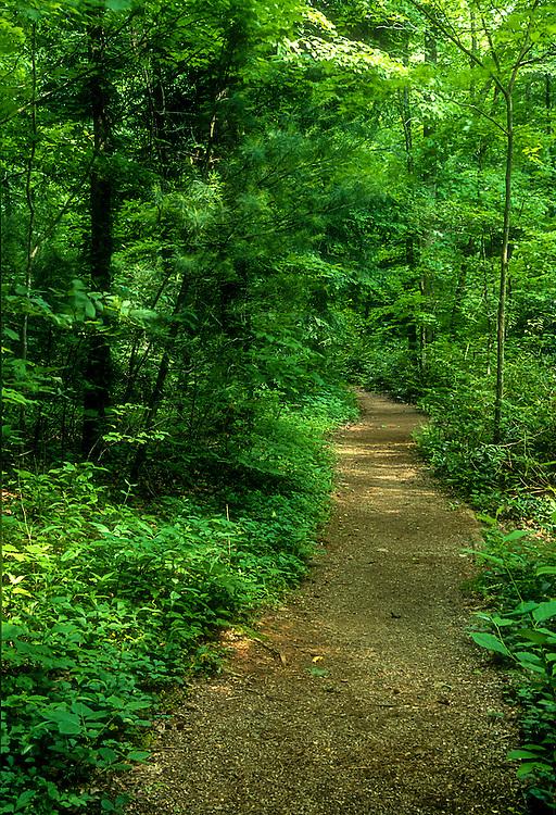 Morning pathway through green trees