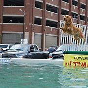 Ultimate Air Dogs at Detroit River Days 2008