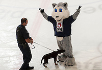 KELOWNA, CANADA - OCTOBER 3:  The RCMP dog squad has some fun with Husky at the Kelowna Rockets on October 3, 2012 at Prospera Place in Kelowna, British Columbia, Canada (Photo by Marissa Baecker/Getty Images) *** Local Caption ***