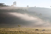 Pedra Bonita_MG, Brasil...Cavalo pastando em uma paisagem em Pedra Bonita...A horse grazing in the landscape in Pedra Bonita...Foto: LEO DRUMOND / NITRO