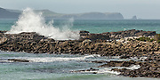 Curio Bay, Catlins, New Zealand