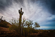Sunset behind a saguaro at Papago Park, Phoenix, Arizona