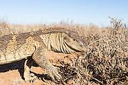 Benfontein Nature Reserve