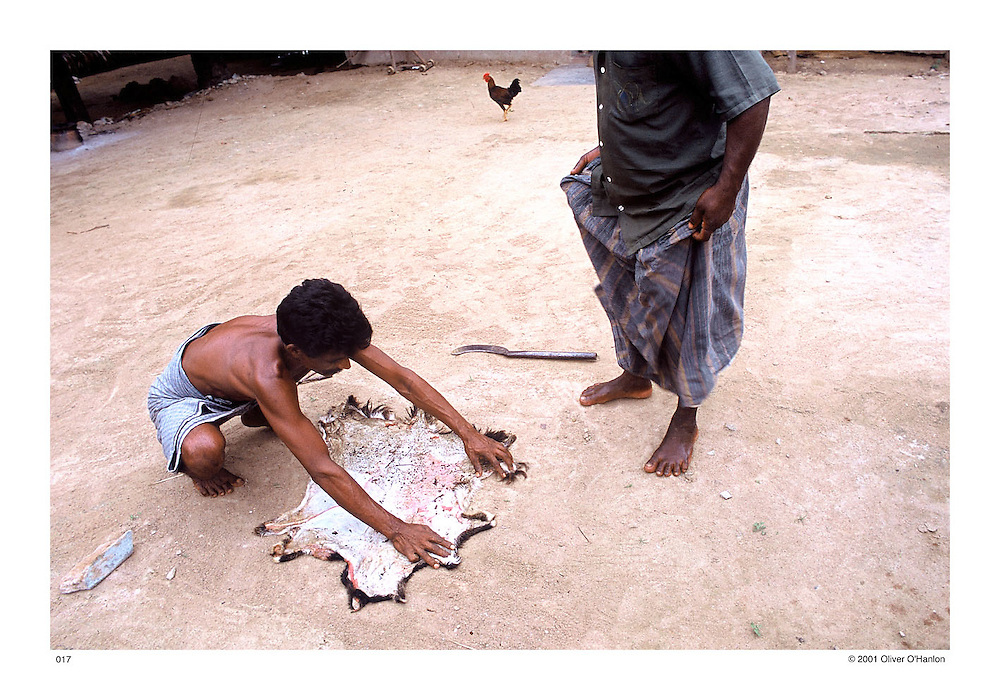 Tamil Nadu. Kanchipuram District. 2001. In the village of Arugundram. A Dalit man stretches out the skin of a goat in order to make a drum that Dalits traditionally use during celebrations.