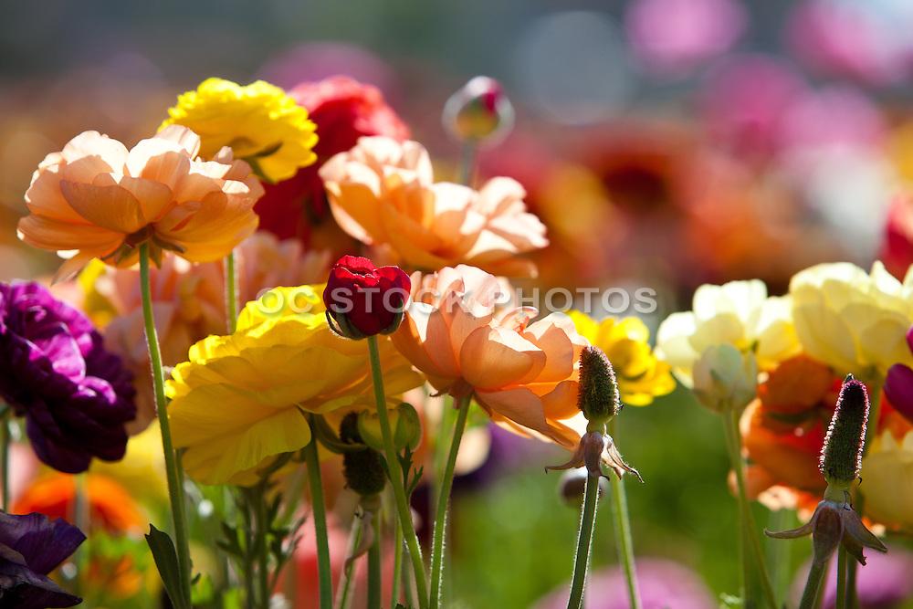 California spring flowers socal stock photos oc stock photos california spring flowers mightylinksfo