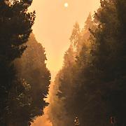 Photo: Francisco Arias / SIPA PRESS<br /> <br />  Chili Dichato 1 f&eacute;vrier 2017<br /> <br /> <br /> Pompiers fran&ccedil;ais lutte contre les incendies dans le sud du Chili.<br /> De grands incendies ont consomm&eacute; des milliers d'hectares.  Ceci est la pire catastrophe dans l'histoire du Chili.<br /> Des milliers de maisons ont &eacute;t&eacute; br&ucirc;l&eacute;es  et des milliers de personnes laiss&eacute;es sans abri.<br /> <br /> D&eacute;tachemenet GFFF fran&ccedil;ais<br /> 70 personnes Total<br /> 41 personnes de l&acute;Unit&eacute; d&acute;Instruction et &acute;Intervention de la s&eacute;curit&eacute; Civile N&ordf;7 de Brignoles  (UIISC7)<br /> 28 persones de l&acute;Unit&eacute; d&acute;Instruction et Intervention de la s&eacute;curit&eacute; Civile N&ordm;5 ( UIISC5)<br /> 1 Sapeur pompier , sp&eacute;cialiste de s&eacute;curit&eacute; invite pour la coop&eacute;ration dans les Andes ( P&eacute;ru, Bolivie, Chili, Argentine, Equateur, Colombie)