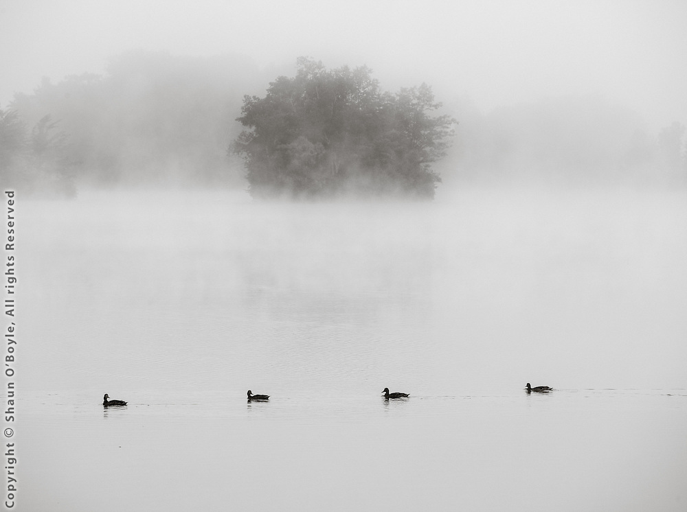 Four Ducks, Cheshire, Ma