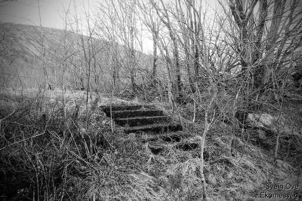 Trapp i skogen.<br /> Foto: Svein Ove Ekornesvåg