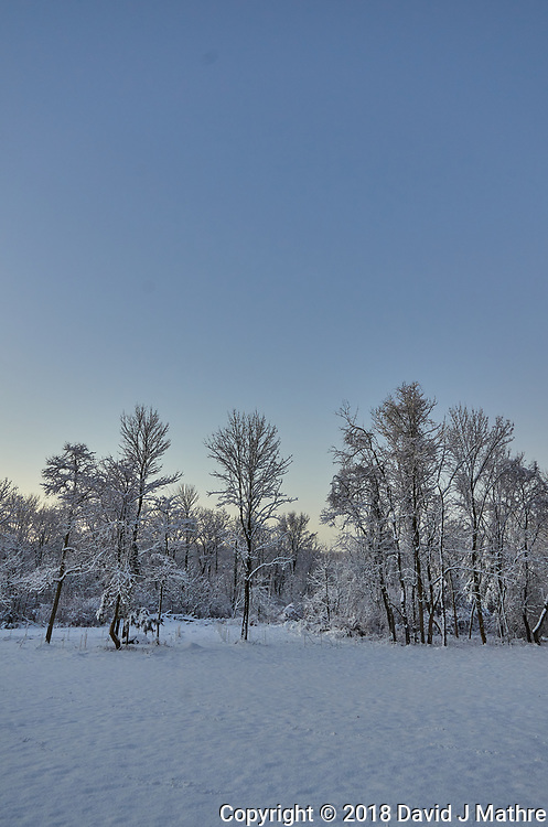Winter Backyard Nature in New Jersey. Image taken with a Leica T camera and 11-23 mm wide-angle zoom lens