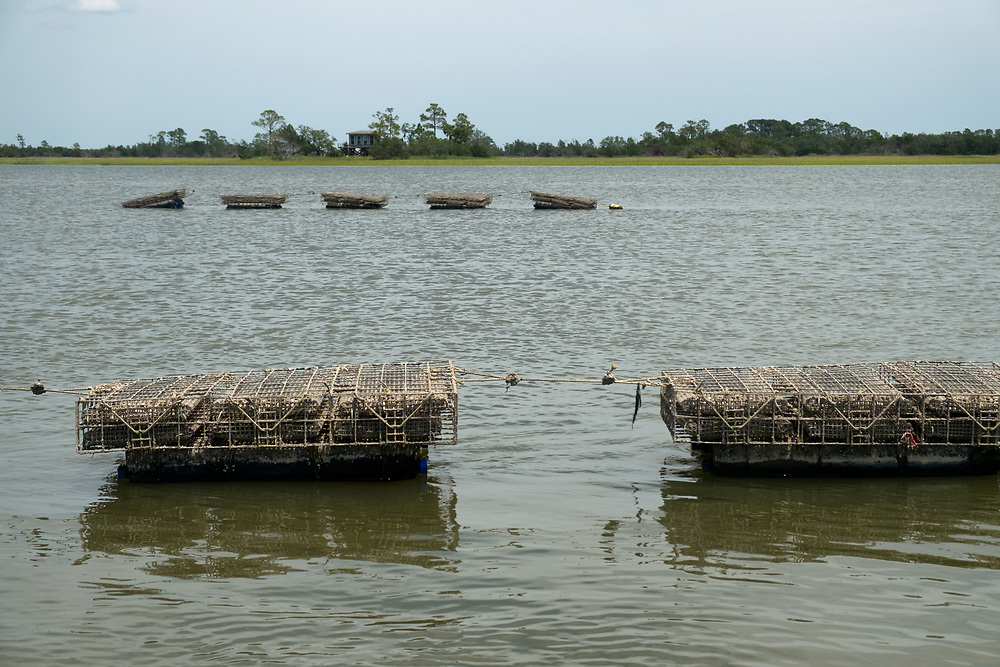 St Jude Farms | Green Pond, South Carolina | May 30, 2017