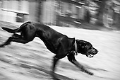Dogs In Motion - B/W