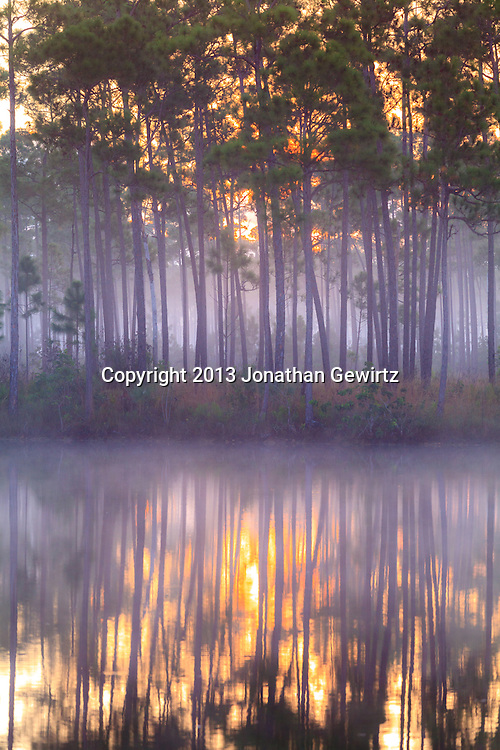 Sunrise fog and reflections at the Long Pine Key pond in Everglades National Park, Florida. WATERMARKS WILL NOT APPEAR ON PRINTS OR LICENSED IMAGES.
