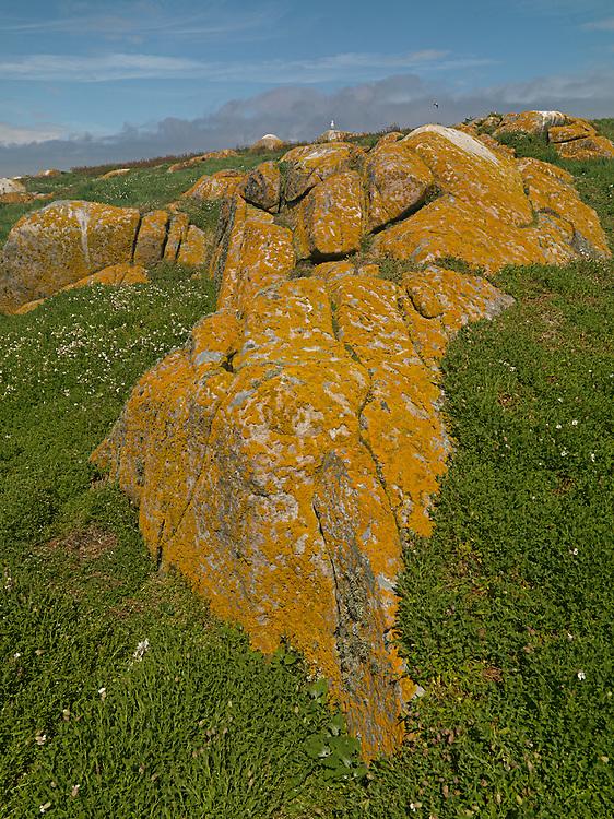 Ornitho Profile lichens, Saltee Island, Ireland