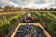 Voyager Estate, Margaret River - Photograph by David Dare Parker