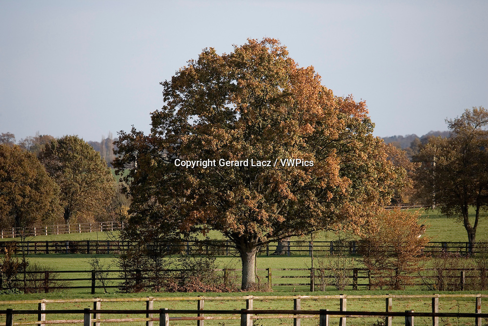 Stud in Normandy, Paddocks for Horses, Oak Tree during Autumn