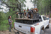 Angie Denny from table Mountain Outfitters with her hounds during a spring bear hunt in Idaho.