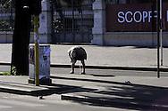 Roma 27 Ottobre 2009.<br /> Una donna  fa la pipi sul marciapiede davanti la Stazione Termini.<br /> Rome 27 October 2009.<br /> A woman pees on the sidewalk in front of Termini Station.
