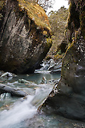 Rob Roy Stream carving through mossy boulders, Rob Roy Glacier Track, Mount Aspiring National Park, New Zealand