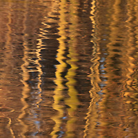 Abstract showing the trunks of trees growing around Burke Lake reflected in the lake at sunrise, Burke Lake Park, Fairfax, Virginia.  Small waves on the surface create an almost kaleidoscopic effect in the reflections.