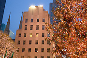 the Christmas tree at the Rockefeller Center in New York City