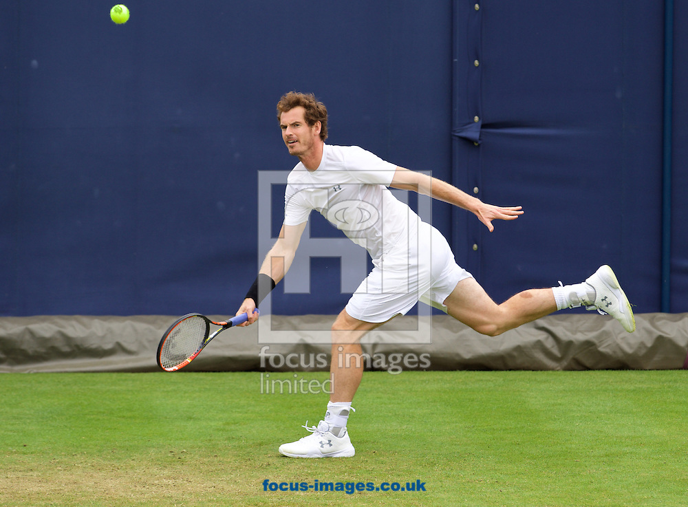 Andy Murray during practise day at Aegon Championships at the Queen's Club, West Kensington<br /> Picture by Alan Stanford/Focus Images Ltd +44 7915 056117<br /> 14/06/2015